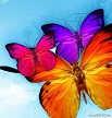 3 colored butterflies