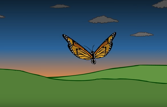 animated monarch butterfly short film