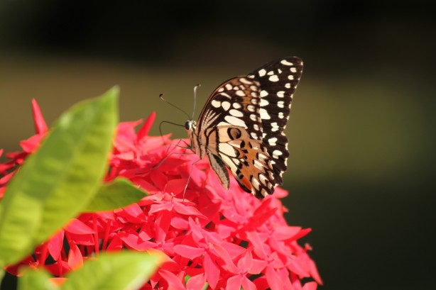 Butterfly on garden flowers