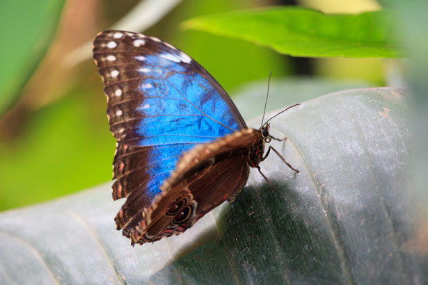 blue colored butterfly