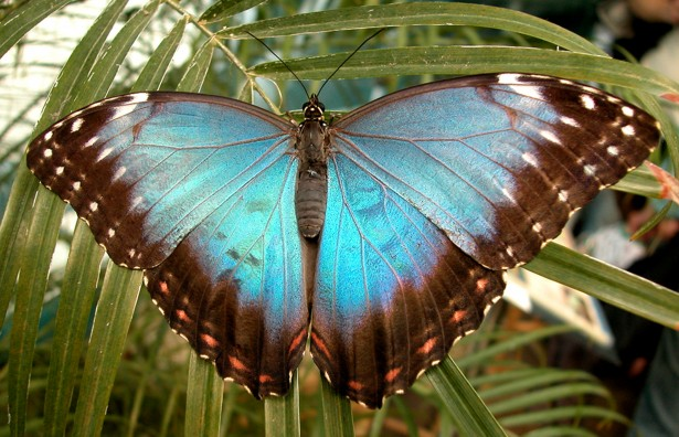 Inspirational blue butterfly