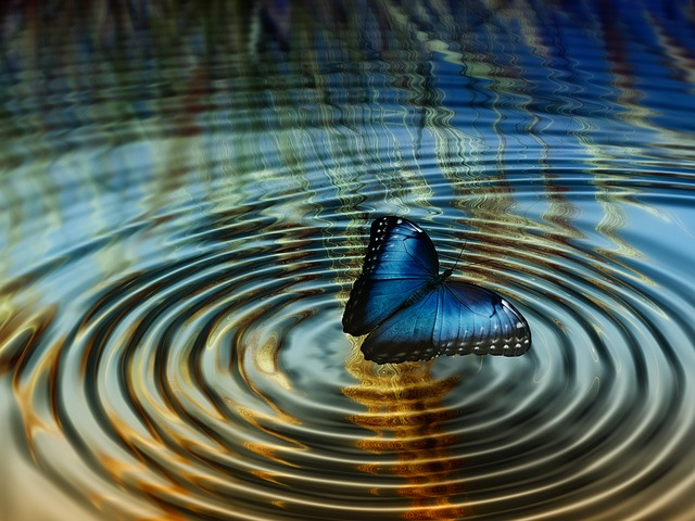Butterfly in pond ripple