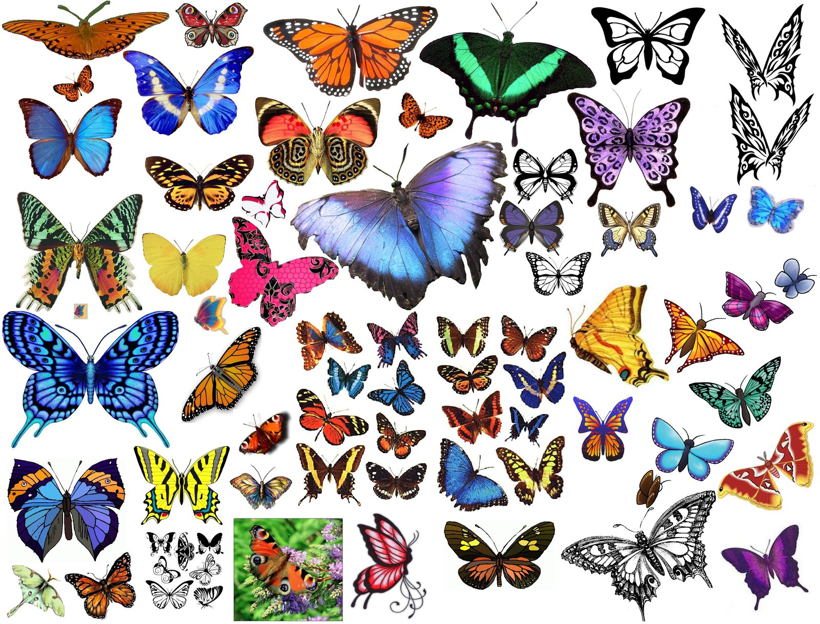 butterfly clipart images giant collage of butterflies