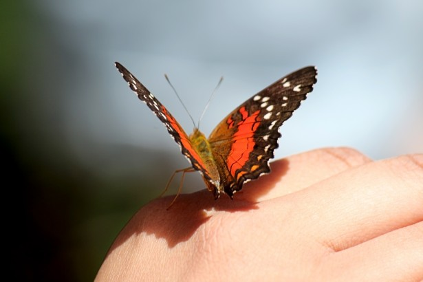 Orange butterfly on hand