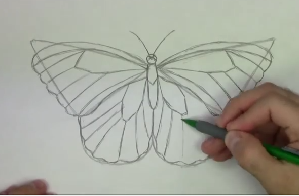 Butterfly artwork drawing butterfly sketch