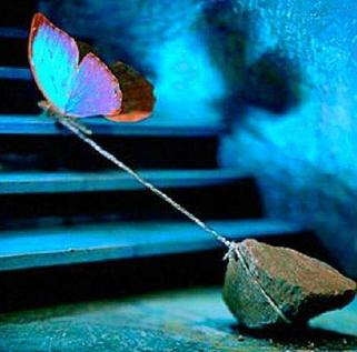 Blue butterfly tied to rock trying to fly