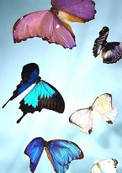 colorful flying butterflies artwork