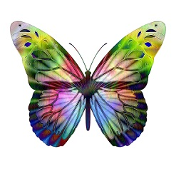 multicolored butterfly artistic image