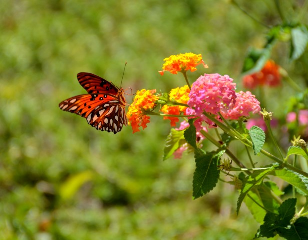 Red butterfly on flowers