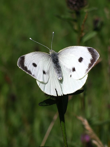 A white butterfly symbol