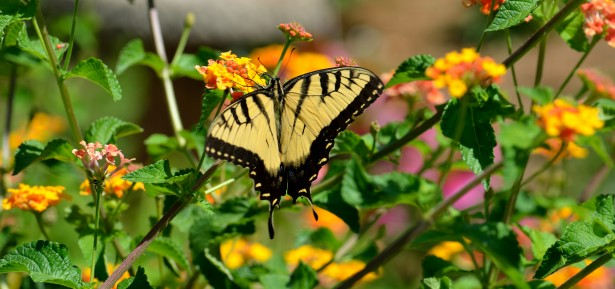 Yellow butterfly in flower garden