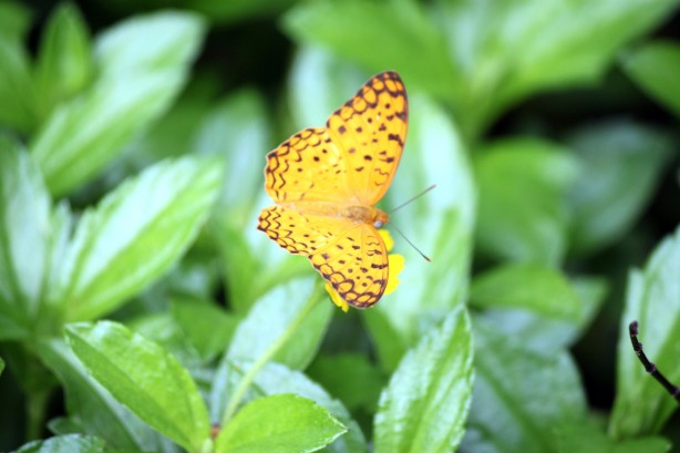 A yellow butterfly symbol